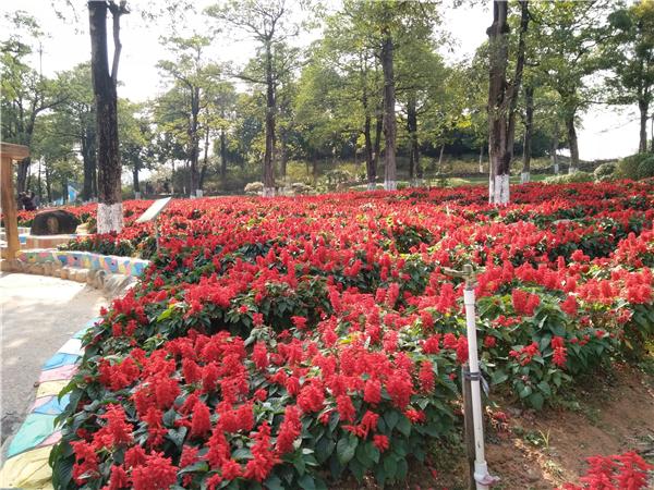 松湖生态园百花盛开